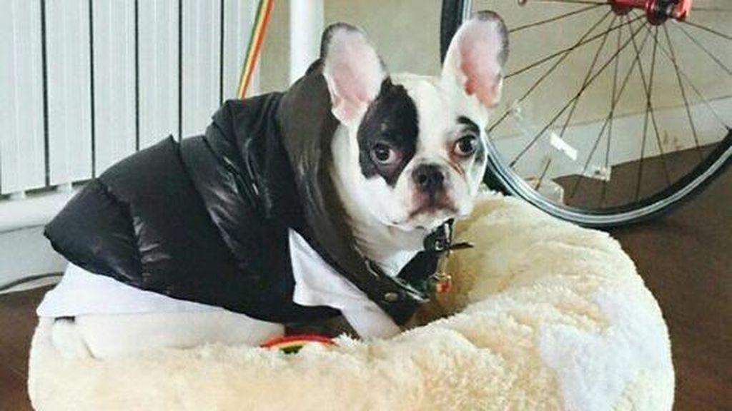 Risiko Ini Mungkin Terjadi Pasca Digigit Anjing Seperti Milik Choi Siwon