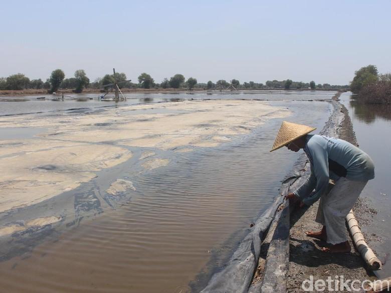 Cerita Petani Garam Saat Hujan - Sidoarjo Petani garam di Sidoarjo gagal Itu setelah kawasan Desa Kecamatan dilanda hujan satu yang hujan yang Senin