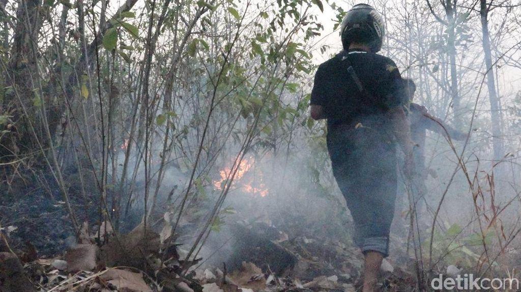 16 Hektar Hutan Bentar Probolinggo Terbakar