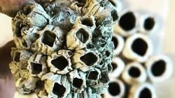 Trypophobia adalah kondisi rasa takut, ngeri, atau jijik berlebih terhadap objek yang berlubang-lubang kecil. Banyak di antara kita mungkin mengalaminya.