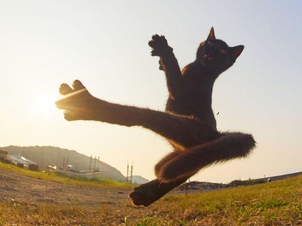 Fotografer asal Jepang Hisakata Hiroyuki memutuskan mendedikasikan sebagian waktunya untuk memotret para kucing. (Foto: Instagram)