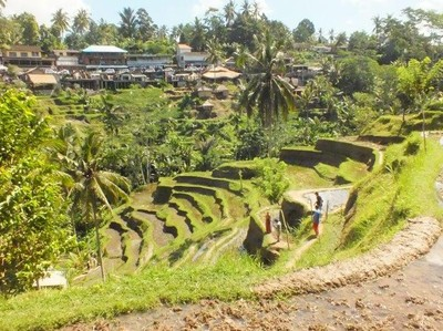 Sepi Turis, Pemkab Gianyar Benahi Lalu Lintas di Ubud