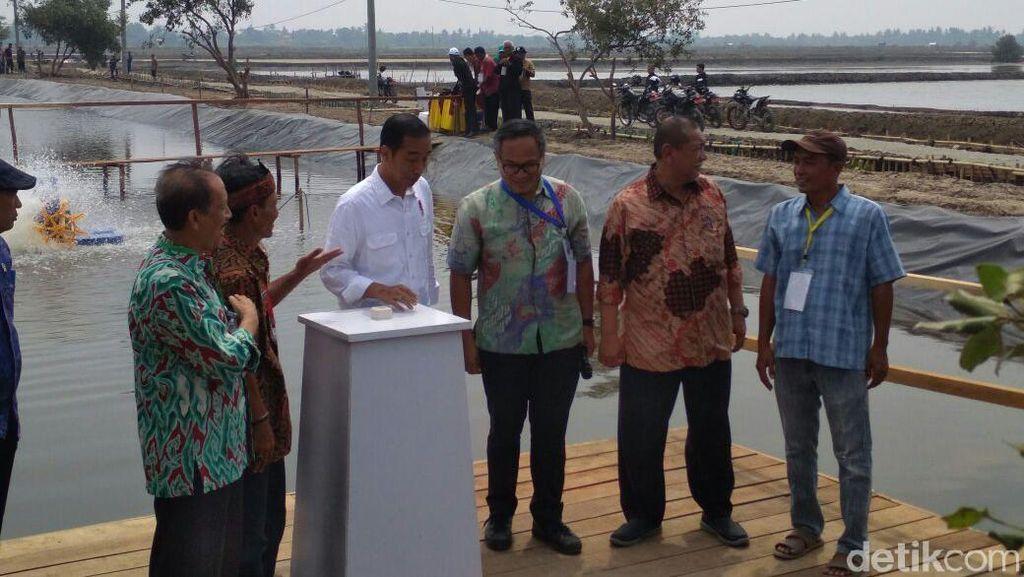 Ke Bekasi, Jokowi Tebar Benih Udang Hingga Tanam Bakau