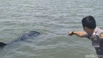 Melihat Penampakan Hiu Tutul di Perairan Pasuruan