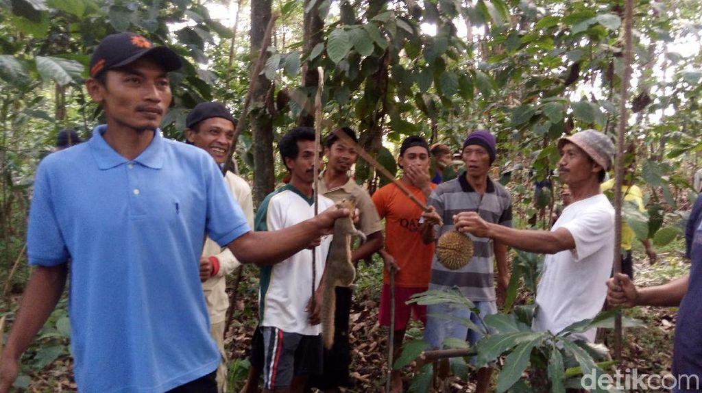 Tradisi Unik, Berburu 2 Ekor Tupai untuk Syarat Merti Dusun
