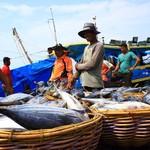 Nelayan Ingin Dapat Bantuan Kapal dari Susi, Begini Caranya