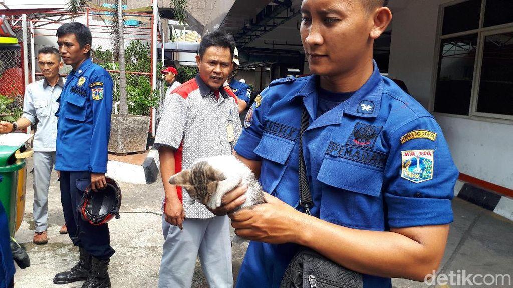 Begini Aksi Heroik Petugas Damkar Evakuasi Kucing dari Blower AC