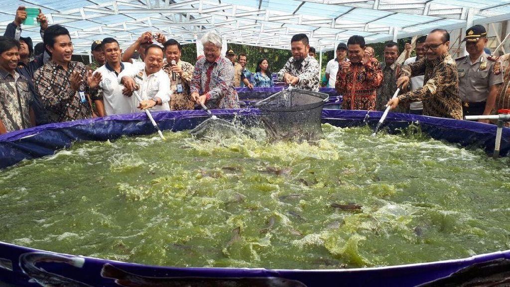 Susi Bidik 24 Juta Ton Produksi Budidaya Ikan Tahun Depan