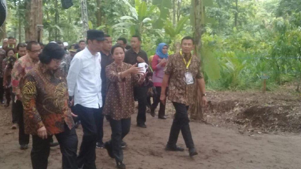 Jokowi: Impor Jagung Disetop, Harga di Petani Naik
