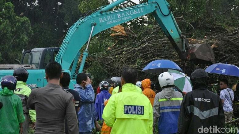 Alat Berat Dikerahkan untuk Evakuasi Pohon Tumbang di Banjarnegara