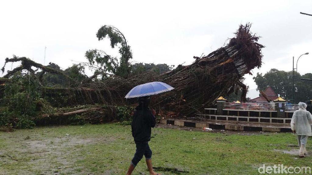 Pohon Tumbang di Banjarnegara, 1 Tewas, 3 Luka Berat
