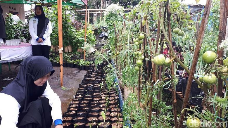Tanam Sayuran, Ibu-ibu Ini Hemat Uang Belanja Rp 40.000/Hari
