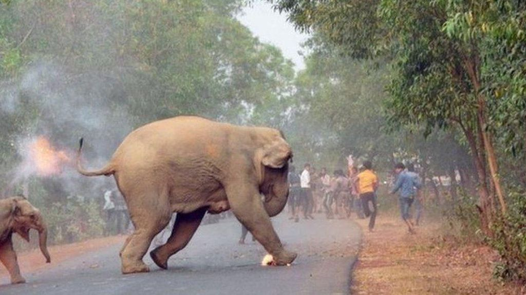 Foto Gajah Terbakar Menangkan Penghargaan di India