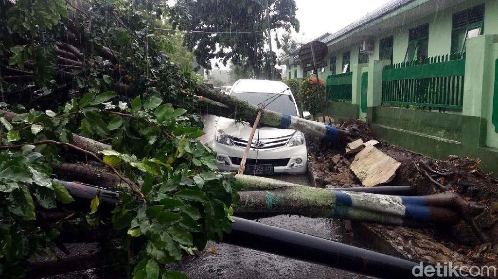 Pohon Tumbang Juga Timpa Mobil di Banjarnegara