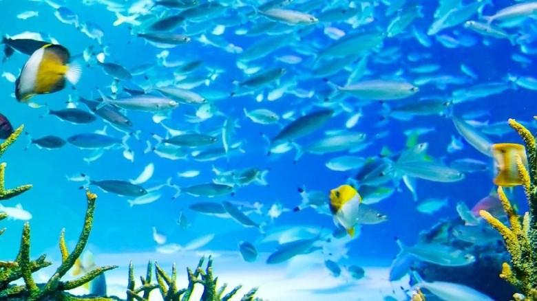 Kekurangan Oksigen, 1.235 Ikan Mati di Akuarium di Tokyo