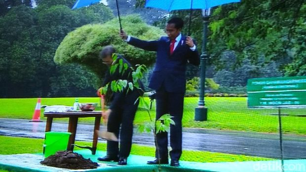 Jokowi dan Moon Jae-in Saling Memayungi Saat Tanam Pohon Gaharu