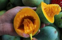 Begini cara makan mangga alpukat dari Pasuruan.