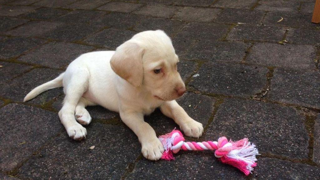 Para Pencuri Terketuk Hatinya, Anjing Curian Pun Dikembalikan