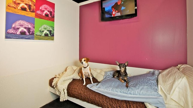 Hotel khusus anjing (dok D Pet Hotels)