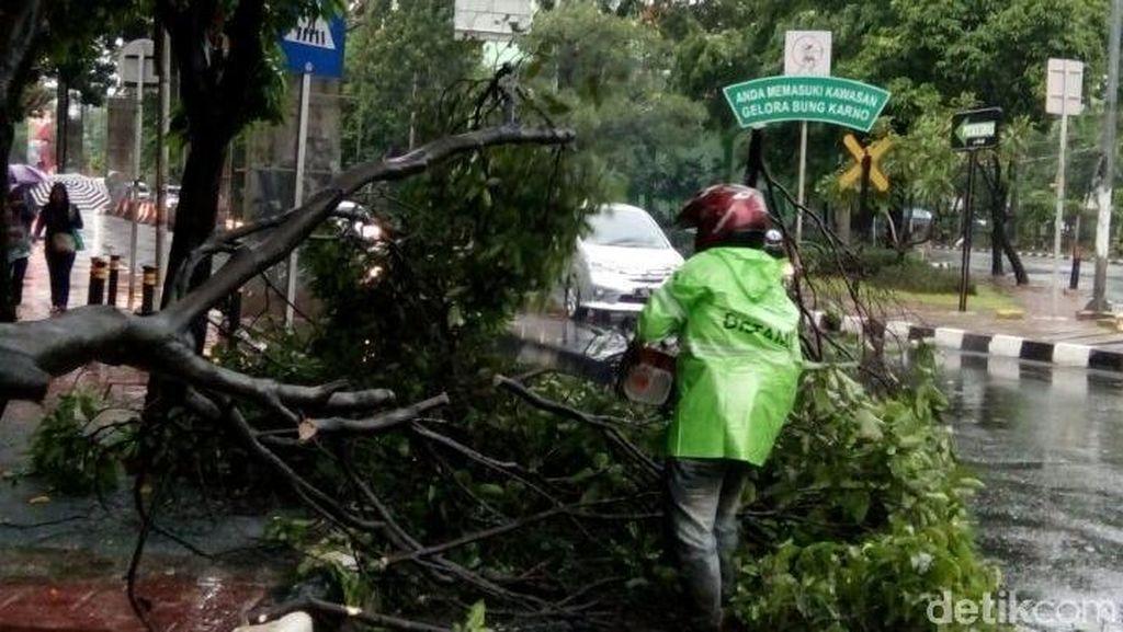 Warga yang Punya Pohon Besar Diimbau Melapor ke Sudin Kehutanan