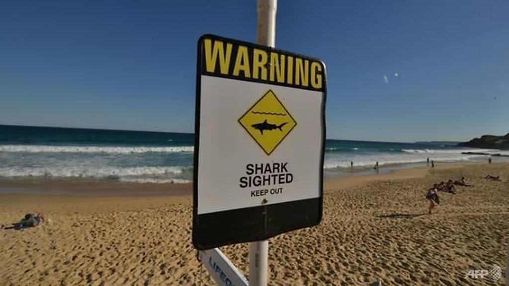 Pria Inggris Tonjok Hiu yang Menyerangnya di Pantai Australia