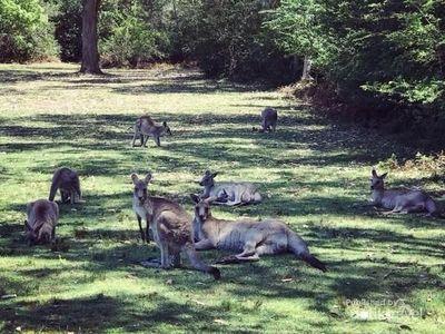 Di Taman Ini, Kamu Bisa Selfie Bareng Kanguru