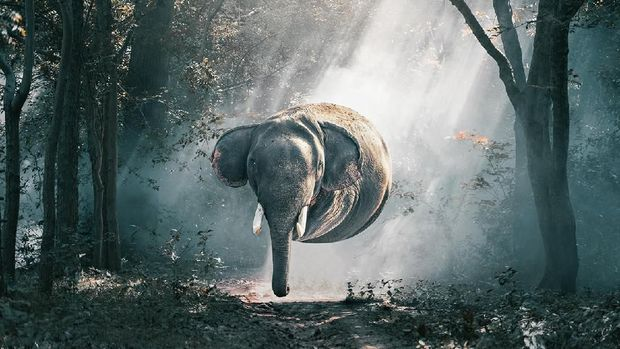 Seniman Aditya Aryanto Ubah Hewan Jadi Makhluk Berbentuk Bulat