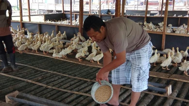 Kisah Polisi Sukses Bisnis Bebek Hingga Bisa Jalan-jalan ke China