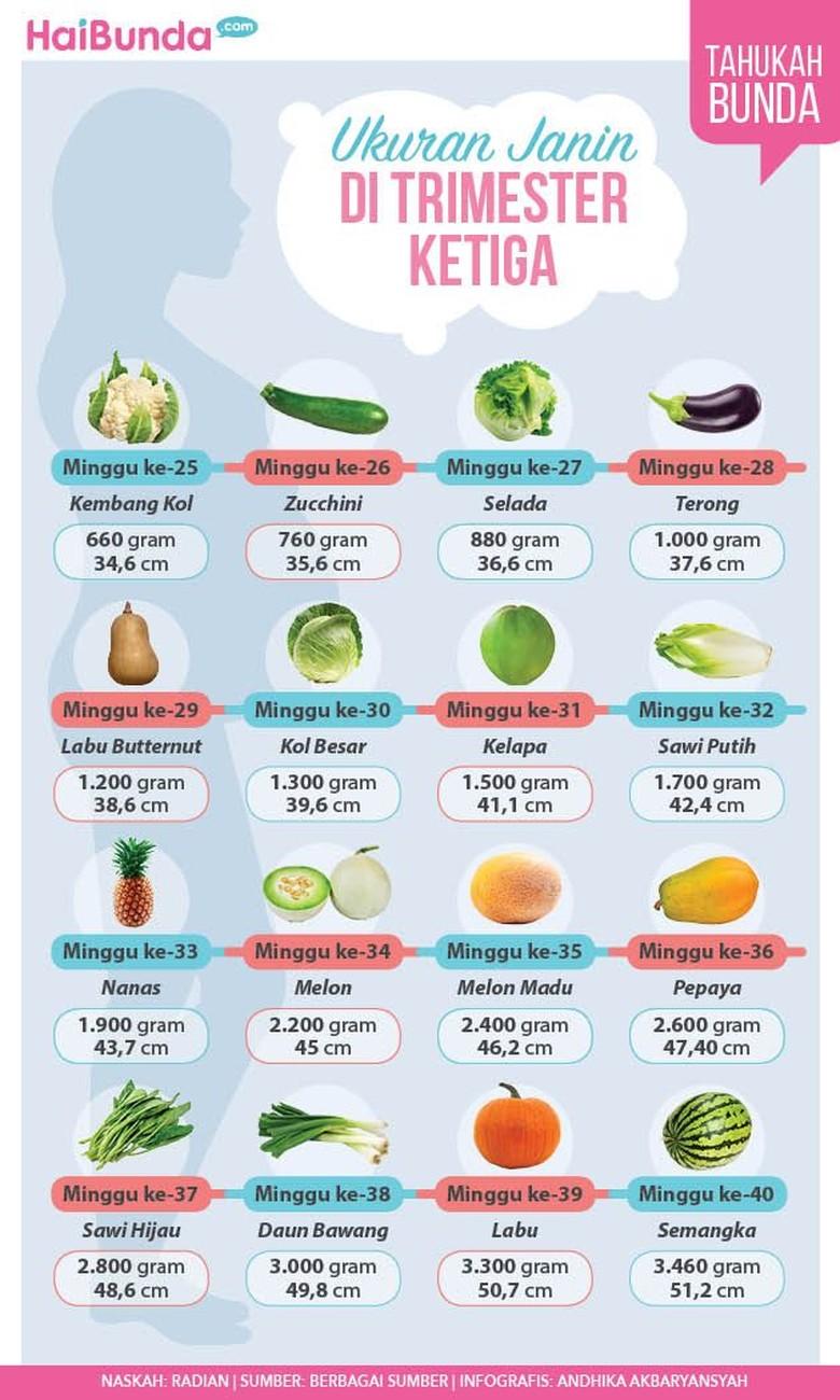 Ukuran dan bentuk janin di trimester ketiga kehamilan/ Foto: Infografis