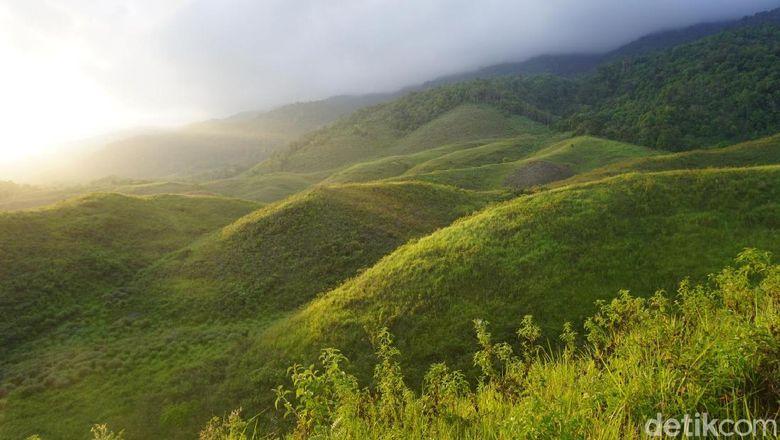 Bukit Teletubbies di Luwuk, Banggai (Wahyu/detikTravel)