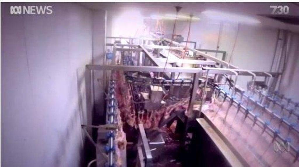 RPH di Melbourne Rebus Ayam Hidup-hidup