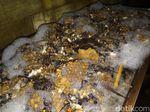 Tragis, Seorang Kakek di Solo Tewas Disengat Ratusan Lebah
