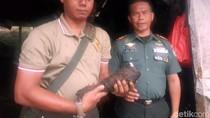 Pemulung Temukan Mortir Aktif di Sungai Cibandung Sukabumi