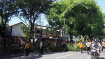 Puluhan Pohon Tumbang di Solo, BPBD Lakukan Pemangkasan