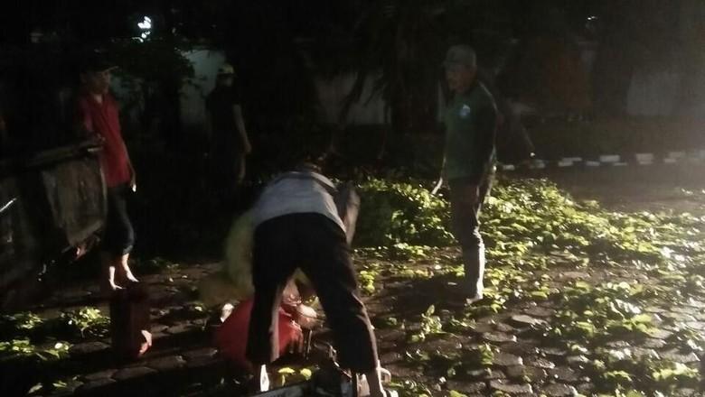 Hujan Disertai Pohon Tumbang di - Jakarta Wilayah Jakarta Barat diguyur hujan disertai angin pada sore menjelang soal pohon tumbang di Jakarta Barat salah