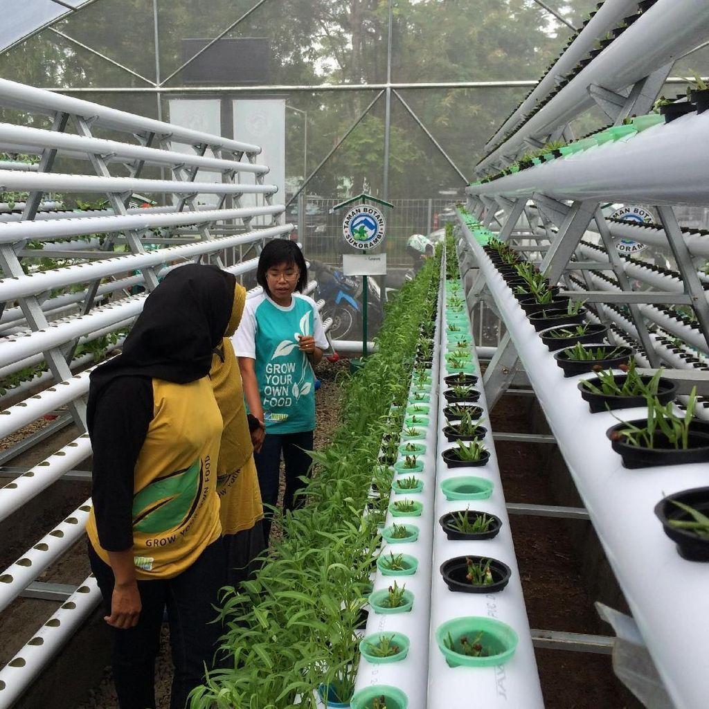 Kebun Hidroponik, Destinasi Agrowisata Baru di Jember