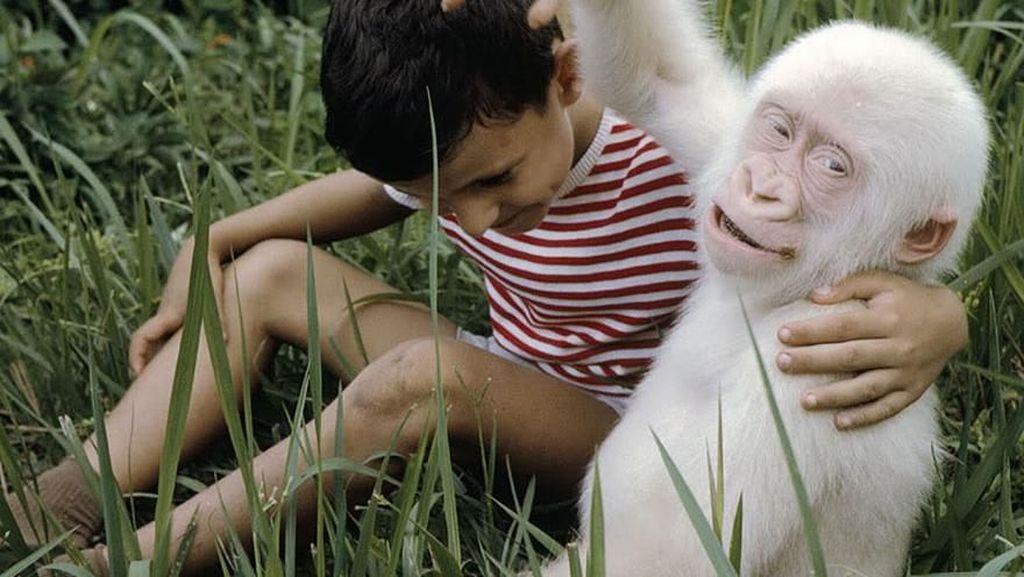 Potret Hewan Albino Langka yang Menakjubkan