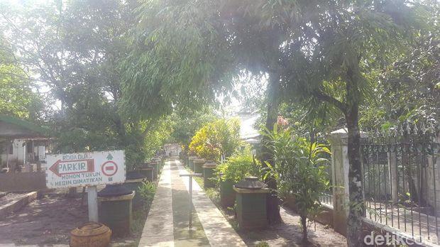 Pohon Nagasari atau Dewadaru/