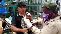 2 Ekor Elang di Aceh Dilepasliarkan Usai Dirawat BKSDA