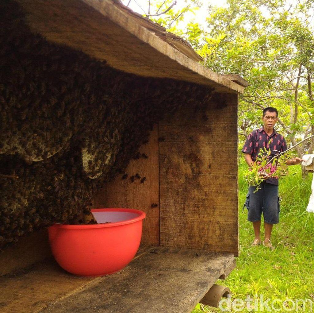 Ke Boyolali, Mengunjungi Budidaya Lebah Jawa yang Mulai Langka