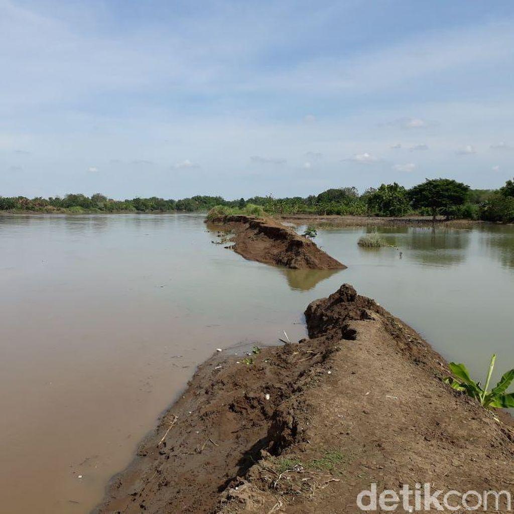 Tanggul Wedok Jebol, 24 Hektar Sawah Dua Desa Terendam Banjir