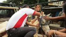 Cerita Dokter Selamatkan Kuda Delman yang Tersungkur di Menteng