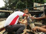 Begini Proses Penyelamatan Kuda Delman Bernasib Nahas di Menteng