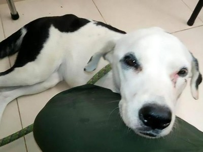 Kasihan, Anjing Ini Menunggu Majikan di Bandara Sampai Mati