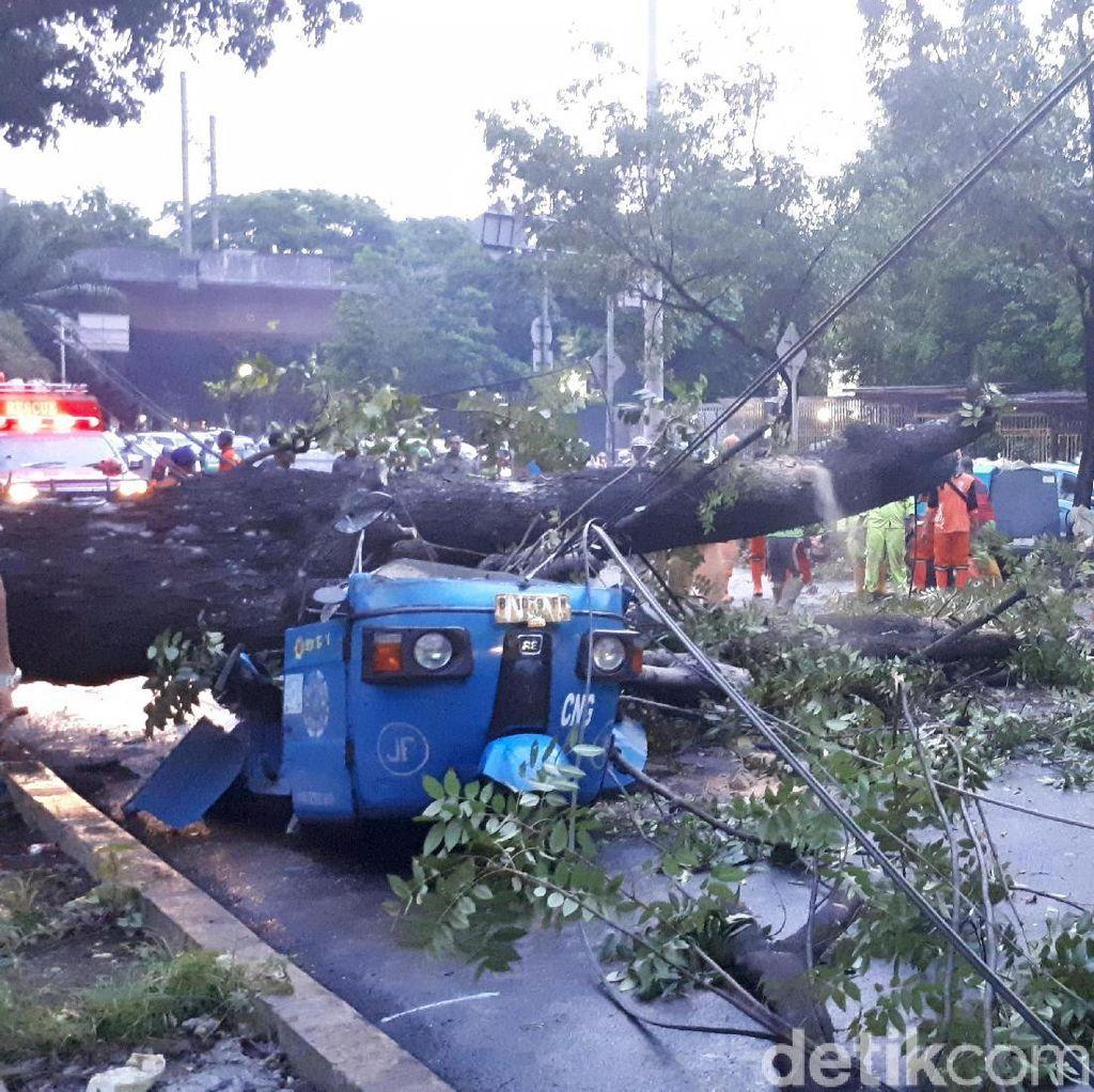 Pemprov DKI Akan Tebang Pohon Cegah Tumbang