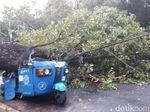 Pohon Tumbang di Samping Istiqlal Timpa 1 Motor dan 1 Bajaj