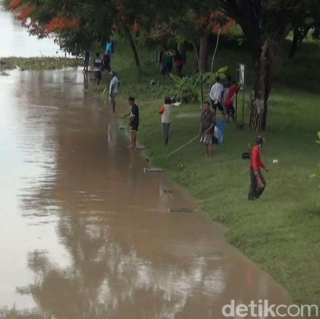 Warga Lamongan Ramai-ramai Ngumbo Ikan di Bengawan Solo