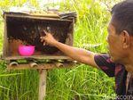Madu Lebah Jawa Budidaya Sri Mardiyati Jadi Langganan Istana
