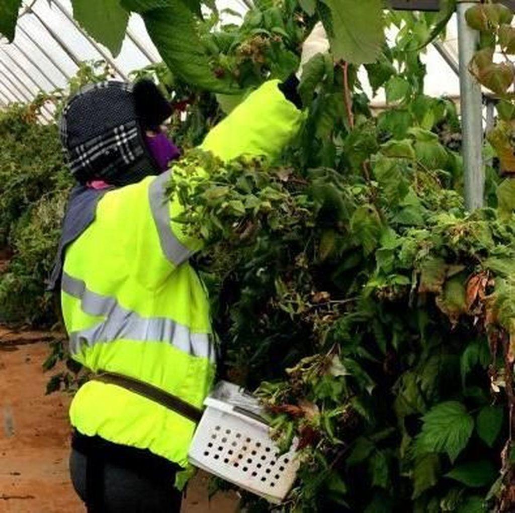 Tak Berdayanya Pekerja Asing di Australia