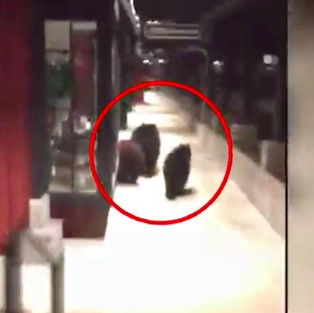 Video: 3 Beruang Terekam Kamera Berkeliaran di Pertokoan California